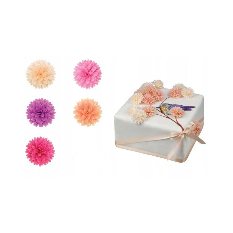 Stokrotka pomponikowa 10 szt Kwiat dekoracja